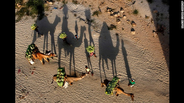 <strong>May 3:</strong> Farmers transport watermelons on camels on their way to market in Allahabad, India.