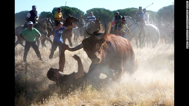 <strong>September 17:</strong> A bull charges over a photographer during the Toro de la Vega festival in Tordesillas, Spain.