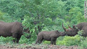 Participants can expect running into Africa\'s Big Five (buffalo, elephant, leopard, lion and rhino).