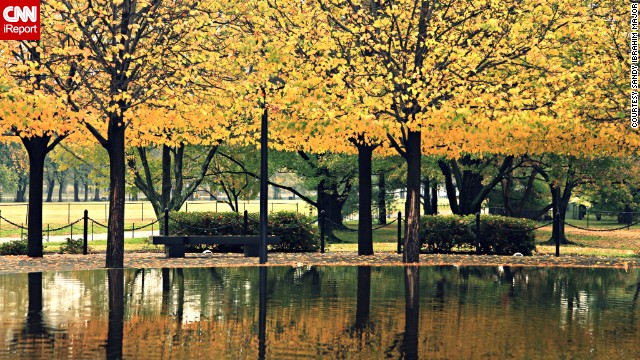 Brilliant yellow leaves glow near the Vietnam Veterans Memorial on the <a href='http://ireport.cnn.com/docs/DOC-1062153'>National Mall</a>.