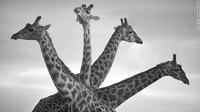 Gulden prefers black and white photography for its timelessness. This photo: Masai Mara National Reserve, Kenya, 2007.
