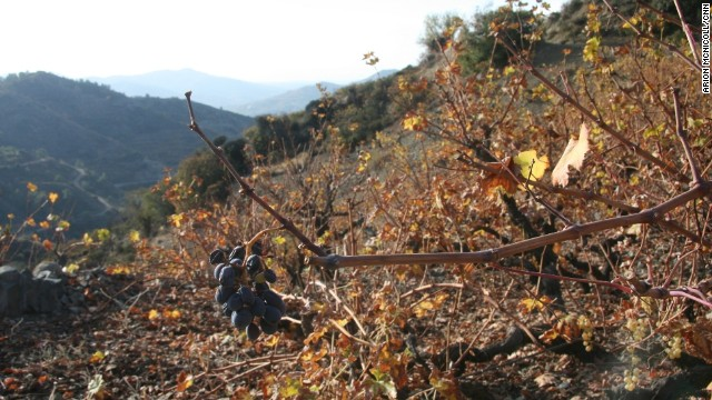 Commandaria is comprised of red Mavro grapes (pictured) and white Xynisteri grapes, which are often both grown together in the same vineyard. The first recorded description of the wine comes from the Ancient Greek poet Hesiod who wrote about nama in 800 BC.