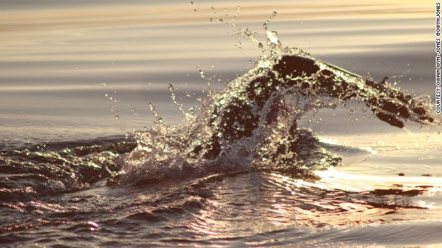 Conway swimming at dusk near Lundy Island off the British coast.