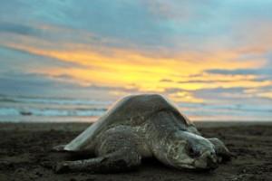 Costa Rica: playas oficialmente aprobadas