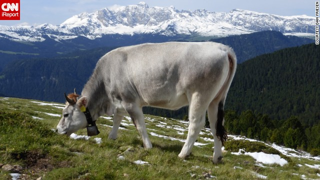 "Dan Friesen hiked Italy's Val Gardena for three hours and saw more animals than people, including this grazing cow with its ""bell tinkling, of course."" See more images of animals in the gorgeous mountains on CNN iReport."