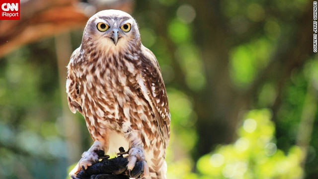 "A barking owl stares into the camera. Jerry Gonzales says he was ""captivated"" by the bird's huge, yellow eyes."