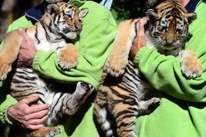El zoológico más interesante de Europa