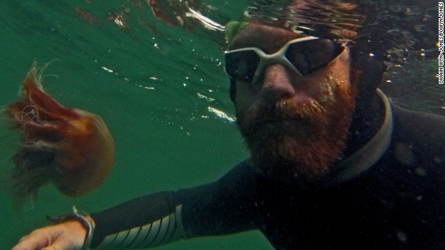 Sean Conway gets up close and personal with a jellyfish during his epic endurance swim of the length of Great Britain. He had to grow a big ginger beard to avoid being stung on his face.