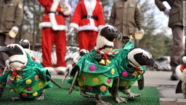 While some preferred the Santa outfit, others decided the Christmas tree look was cuter.