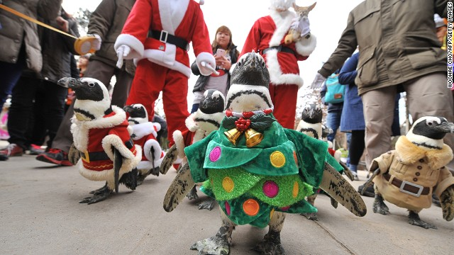 This adorable daily penguin walk was part of Everland amusement park's countdown to Christmas.