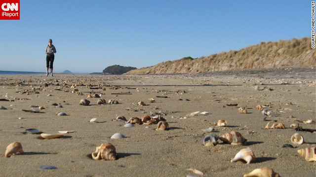 "Thousands of flawless seashells washed up on Waihi Beach, New Zealand, one brisk winter morning. ""I was like a kid in candy shop,"" said Cindy Schultz, who was there visiting her daughter in July 2011."