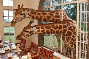 Giraffe Manor (Kenia)