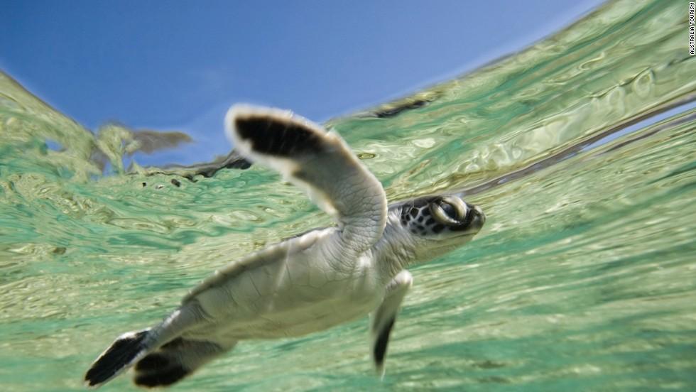 Isla Hayman (Australia)