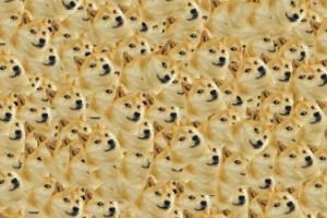 9. Doge