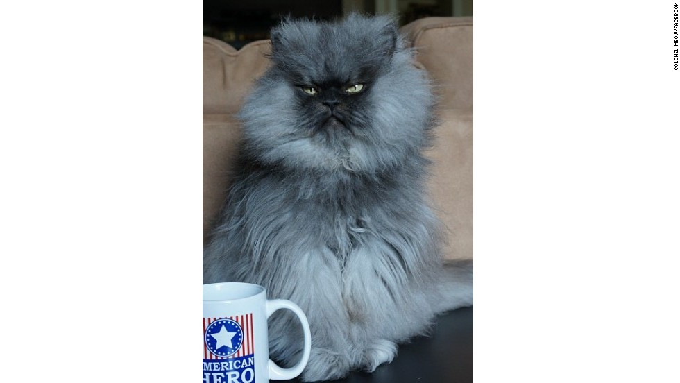 8. Colonel Meow