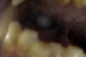 ¡Un oso pardo se comió mi GoPro!