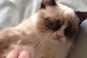 ¡Gato gruñón (Grumpy cat)!