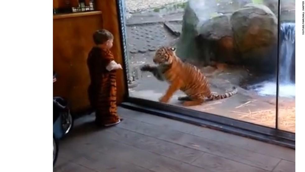 Niño pequeño canaliza su tigre interior