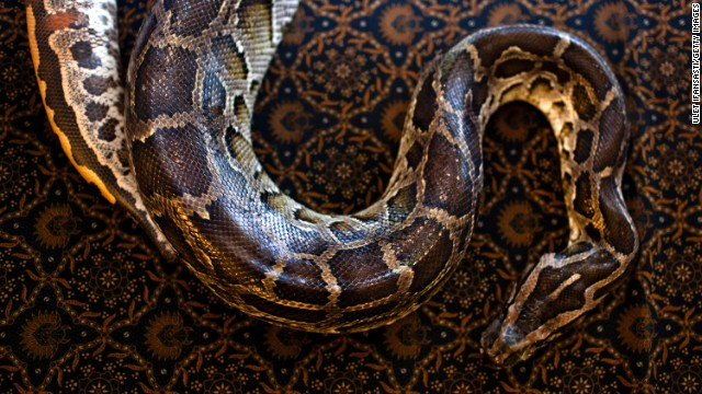 Python kills security guard in Bali