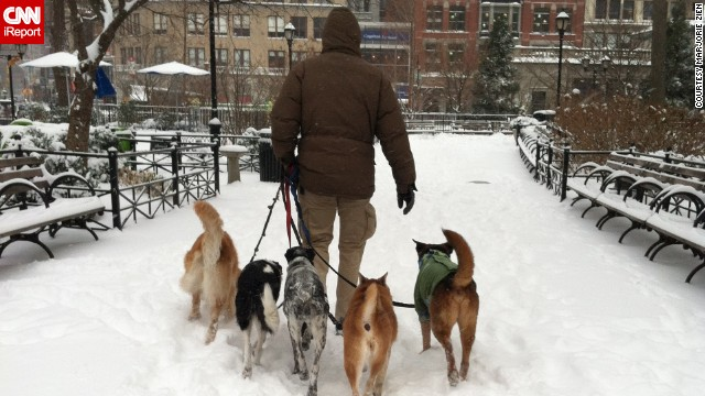 Friday's snowstorm wasn't going to slow down New Yorkers, whether on two legs or four, said <a href='http://ireport.cnn.com/docs/DOC-1072088'>Marjorie Zien</a>. While commuting to work, she photographed this man walking five dogs in Union Square Park on January 3.