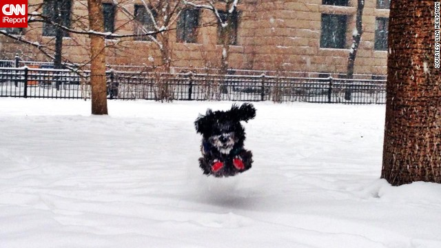 Three-year-old mixed breed Boris couldn't wait to go outside and romp around. Boris spent Friday morning chasing squirrels in a Chicago park, said his owner,<a href='http://ireport.cnn.com/docs/DOC-1072273'> Liza Heiligman</a>.