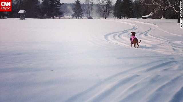 <a href='http://ireport.cnn.com/docs/DOC-1072201'>Julie Johnson</a> and her dog, Kaiah, enjoyed a snow day in the Berkshires on Friday. She photographed Kaiah staring off into snow, which blanketed Great Pine Farm in Great Barrington, Massachusetts.