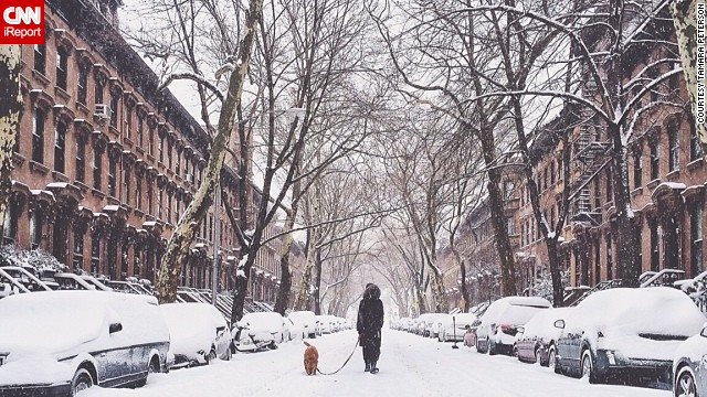 Spending a quiet moment out in the snow, <a href='http://ireport.cnn.com/docs/DOC-1072196'>Tamara Peterson</a> photographed a neighbor walking her dog in the Fort Greene neighborhood of New York City.
