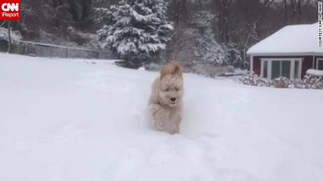 <a href='http://ireport.cnn.com/docs/DOC-1072214'>Karsh Sahay's</a> goldendoodle puppy was beside himself when he ran out into the snow in Glen Head, New York, an area that had more than 10 inches of snowfall on January 2.