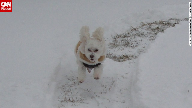 <a href='http://ireport.cnn.com/docs/DOC-1072358'>Barbara and Steve Elinski </a>say their pup Teddy just couldn't get enough of the fluffy white powder that piled up outside their home in Cohoes, New York, after the nor'easter came through on January 3. He was enjoying the snow so much that the Elinskis had to carry him back inside before he froze.