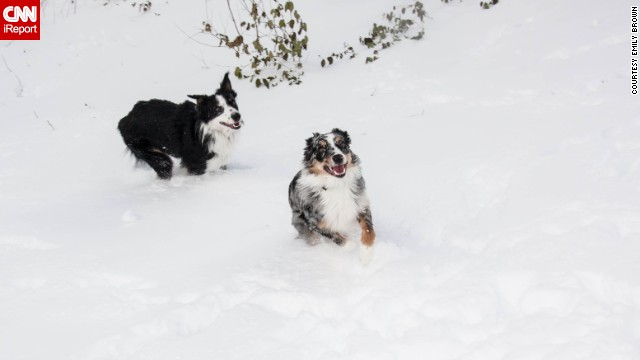 "<a href='http://ireport.cnn.com/docs/DOC-1072500'>Emily Brown</a> has two incredibly active Australian shepherds. The two brothers were partaking in ""snow madness"" as she likes to call it. ""They will jump up and down, bury themselves in the snow, and chase each other through the yard,"" the Indianapolis resident said."