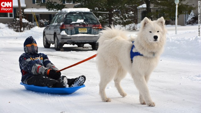 This samoyed named <a href='http://ireport.cnn.com/docs/DOC-1072647'>Chewie</a> looks majestic against the snowy backdrop in New Providence, New Jersey. The area got more than 7 inches of snow on January 3 and Chewie can't get enough of the fresh powder.