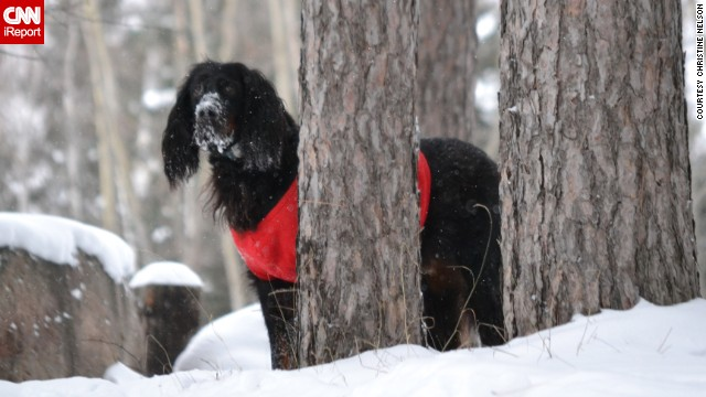 Even though her 10-year-old gordon setter Pete is getting older, <a href='http://ireport.cnn.com/docs/DOC-1072677'>Christine Nelson</a> says he enjoys everything about the snow. The Wisconsin resident photographed Pete trotting through the snow in their backyard after more than 20 inches accumulated in some parts of their area.