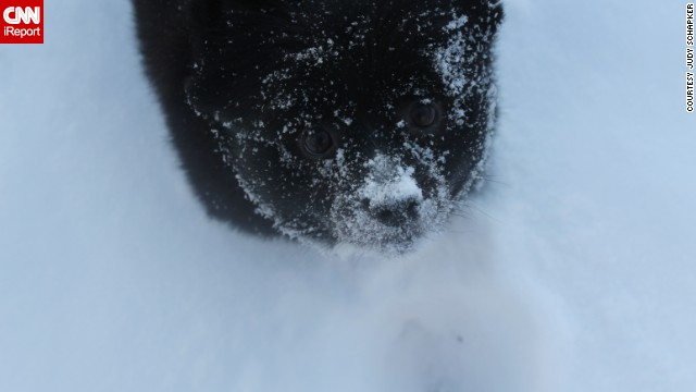 "<a href='http://ireport.cnn.com/docs/DOC-1072603'>Judy Schapker's</a> pomeranian Jet can't stop sticking his face in the snow. ""If we throw a handfull of snow into the air, he loves to jump up and try to catch it as it falls,"" the Cincinnati resident said."