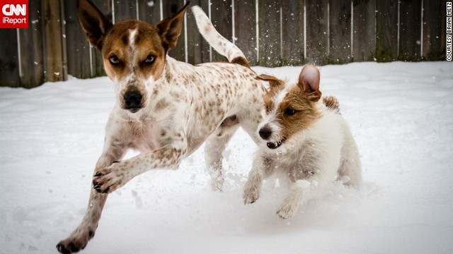 A little snow won't stop these two from enjoying a run in northeast Ohio on January 6.