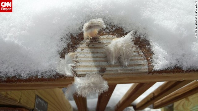 Maranda McClaskey knew the birds in Harrisville, West Virginia, would appreciate extra food in the chilly weather on January 6. But when one poor bird landed on her porch to eat, it got stuck to the ice! Finally the bird managed to free itself -- but it left these feathers behind.