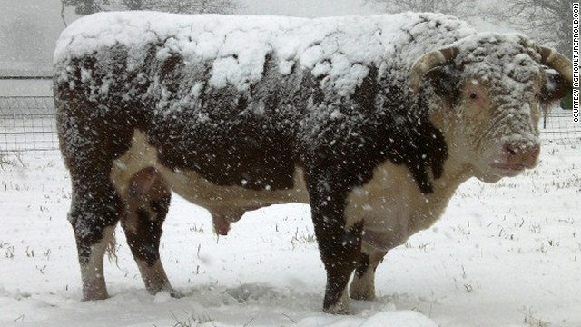 'Frostbite on their teats' and other cold weather farming issues