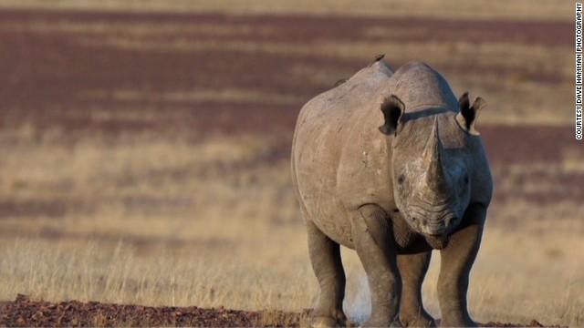 Polémica subasta en Dallas para cazar un rinoceronte negro, en peligro de extinción
