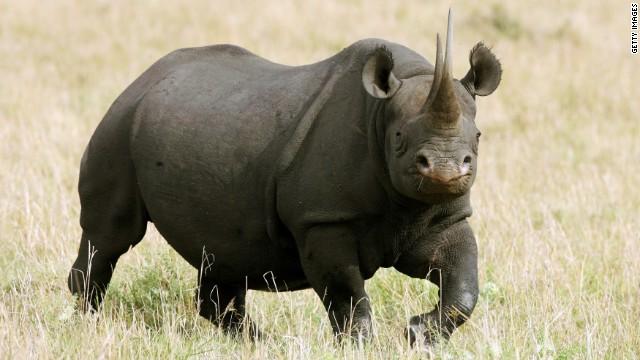 Ganador de subasta para cazar un rinoceronte negro: Mis 350.000 dólares ayudarán a salvar la especie
