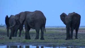 140113132503-spc-inside-africa-elephants