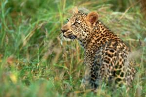Noviembre: Búsqueda de animales en Sudáfrica