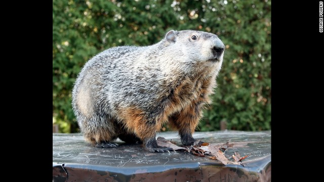 Head to Gobbler's Knob to spot Punxsutawney Phil, whose February 2 appearance is meant to predict how much longer winter will last.