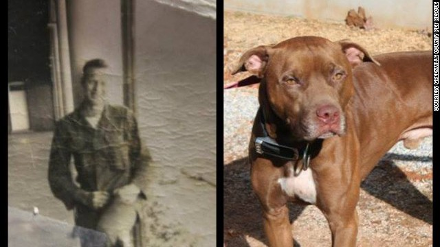 An old black-and-white photo was found tucked inside the collar of a stray dog in South Carolina. So far the photo has offered very few clues.