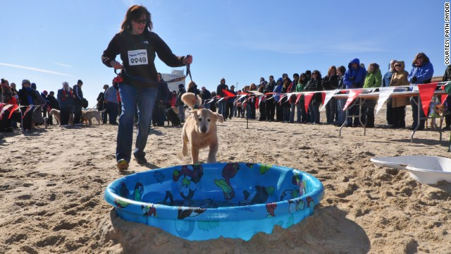 Daring dogs might go for the Pooch Plunge as part of the Polar Bear Plunge Weekend Festival benefiting Special Olympics Delaware.
