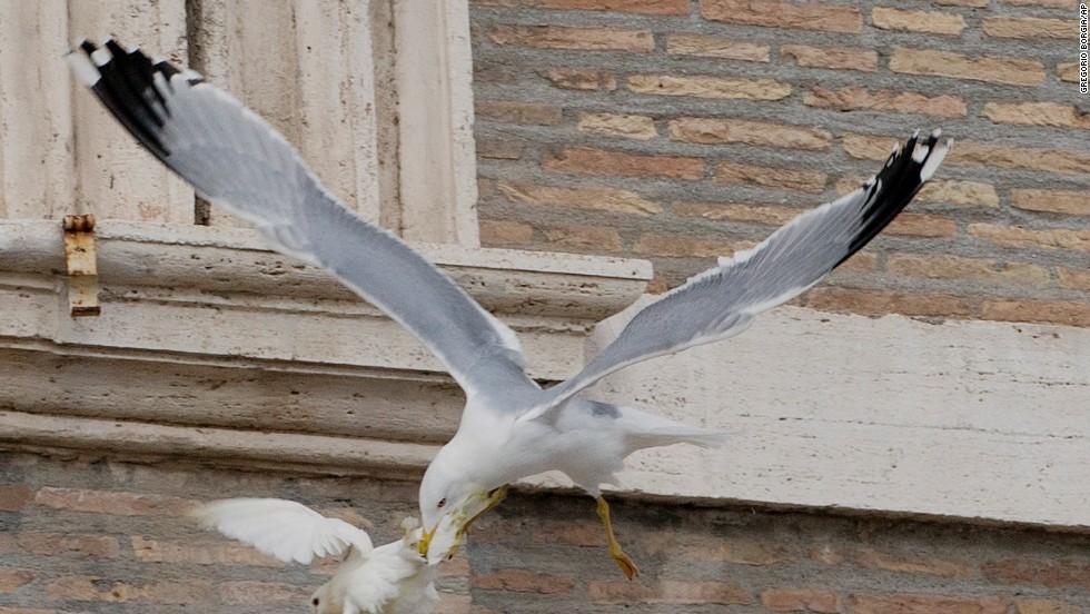Aves atacan a las palomas del papa Francisco