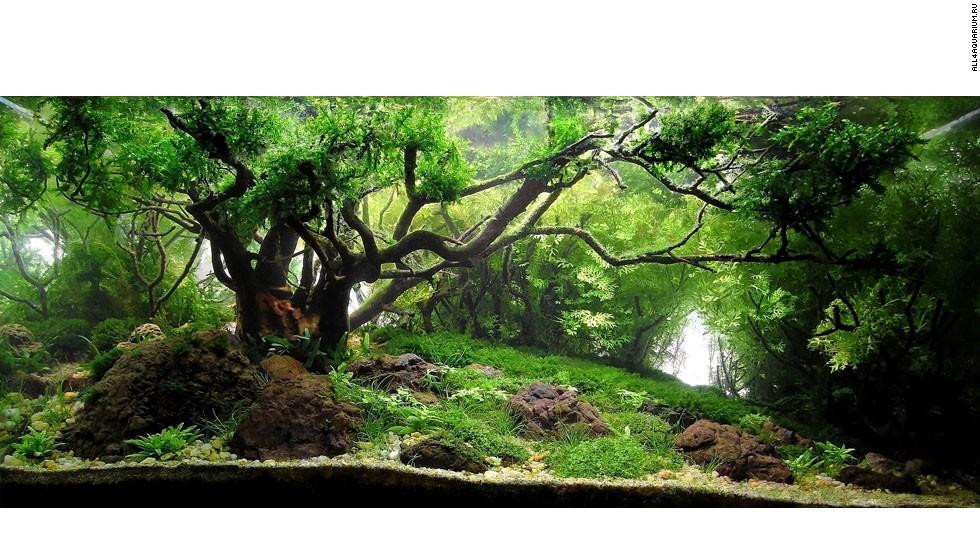 Transforma tu pecera el misterioso mundo del paisajismo for Peceras para jardin