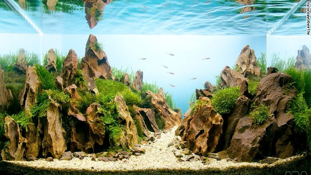 In this aquascape by Hungarian enthusiast Melinda Koncsik, water seems to transform into the sky, while ripples on the surface serve as clouds. The 20-liter tank includes red cherry shrim