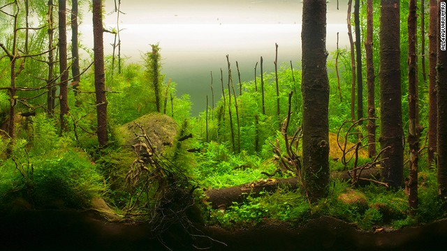 "This aquarium by a Russian aquascaper is meant to recreate the Russian taiga. A judge at the International Planted Aquarium Design Contest praised it in these terms: ""It looks so realistic: dead and fallen trees, green dense carpet of mosses and ferns, big anthills, rocks left there by glacier..."""