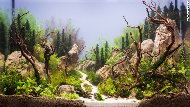"This Russian aquarium features several large rocks. Karen Randall, a board member at the <a href='http://www.aquatic-gardeners.org/' target='_blank'>AGA</a>, says it is important for aquascapers to think of ""hardscapes"" around which to build their designs. ""In the terrestrial garden, the gardener usually has to think more about the natural terrain he or she has to work with,"" she says. ""The only thing we start with is 4 glass walls."""