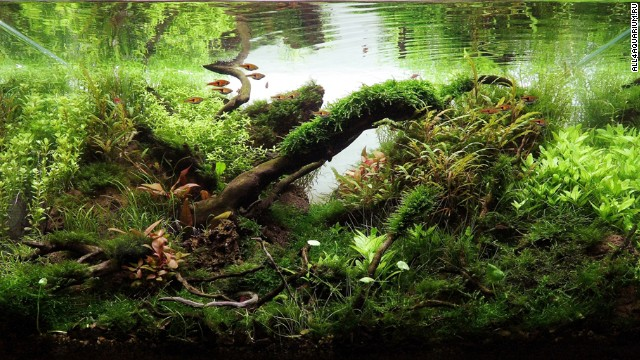 Pimp my fish tank: This is the eerie, beautiful world of aquascaping ...