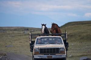 Cultura de caballos